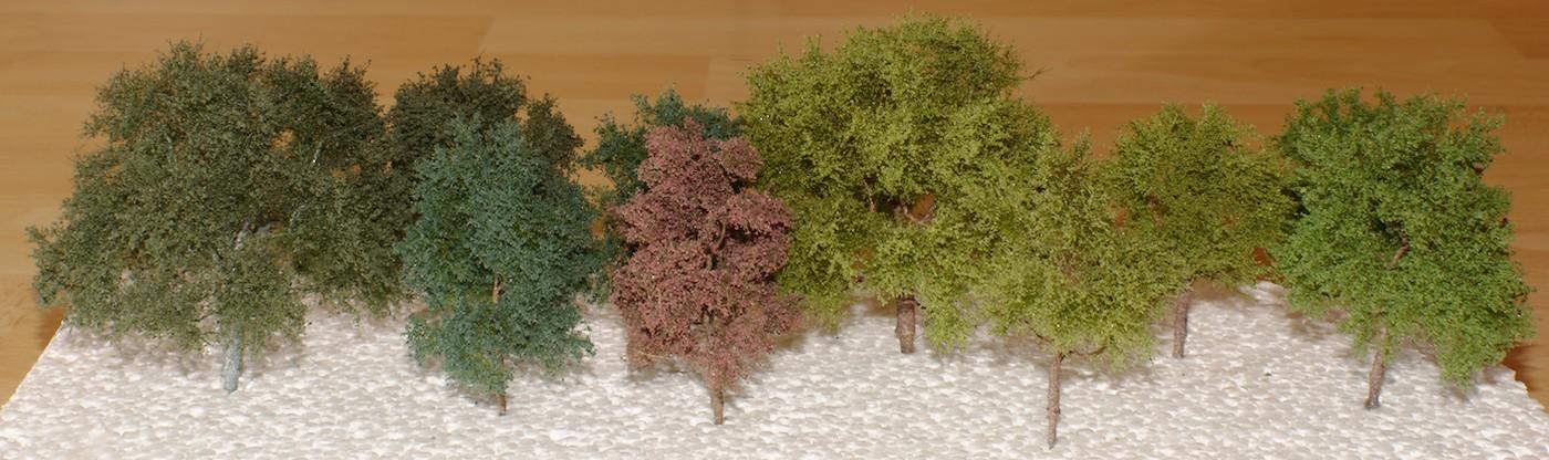 Baumwachstum